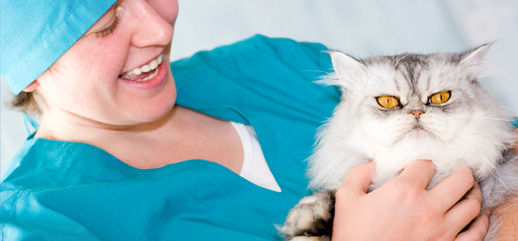 Lead a Happier And Healthier Life By Caring For Your Pet